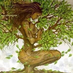 médecine sacrée des plantes
